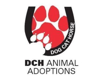 DCH Animal Adoptions