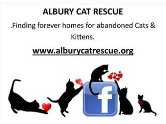 Albury Cat Rescue