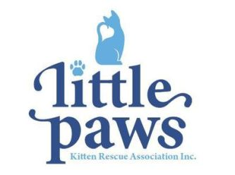 Little Paws Kitten Rescue Association