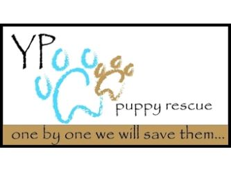 Large yppr logo full