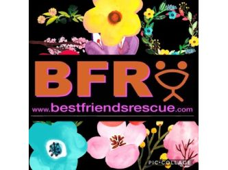 Best Friends Rescue QLD