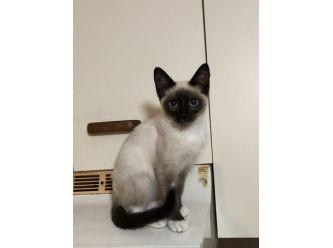 Phoenix's Kitten Rescue