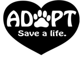 Large pet food supplies telling tails chelmsford adopt save life