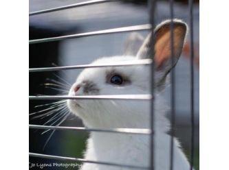 Binky Babies Bunny Rescue