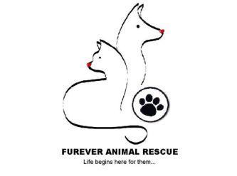 Furever Animal Rescue