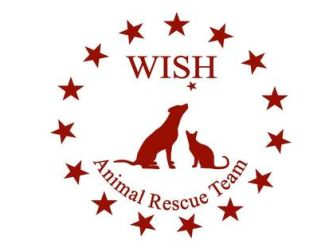 Large wish logo