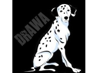 Dalmatian Rescue Association of Western Australia