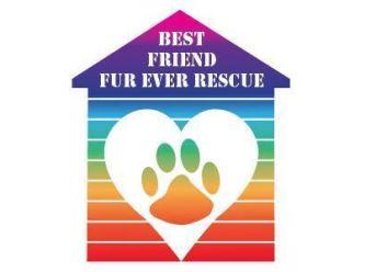 Best Friend Fur Ever Rescue