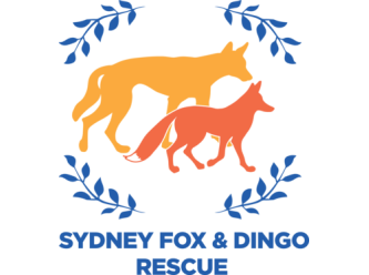 Sydney Fox and Dingo Rescue