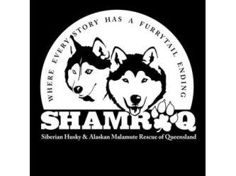 Siberian Husky & Alaskan Malamute Rescue of Qld Inc. (SHAMROQ)