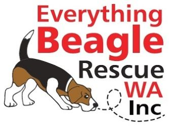 Everything Beagle WA