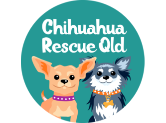 Chihuahua Rescue Queensland