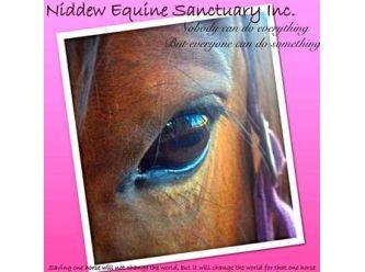 Niddew Equine Sanctuary Inc.