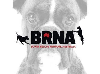 Boxer Rescue Network