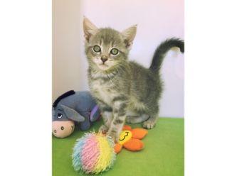 Large kitten2