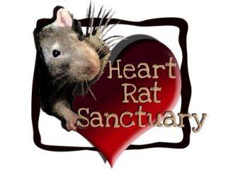 Heart Rat Sanctuary