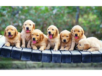 A1 Wheatbelt Dog Rescue inc.
