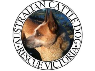 Australian Cattle Dog Rescue Victoria
