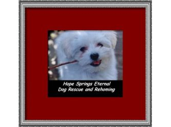 Hope Springs Eternal Dog Rescue & Rehoming