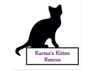 Karma's kitten and K9 rescue