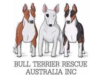 Bull Terrier Rescue Australia