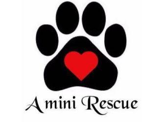A Mini Rescue