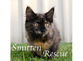 Large smitten rescue