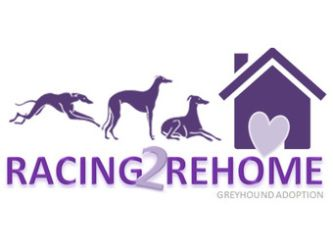 Racing 2 Rehome Greyhound Adoption