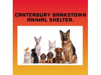 Large canterbury bankstown animal shelter