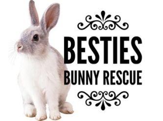 Besty's Bunny Rescue
