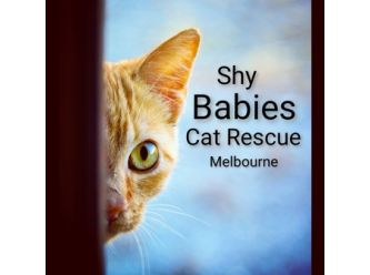 Helen's Angels Cat Rescue Melbourne