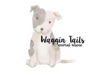 Waggin Tails Rescue