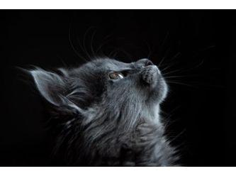 Monarch Cat Rescue