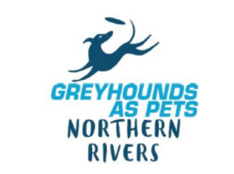 Northern Rivers Greyhounds as Pets