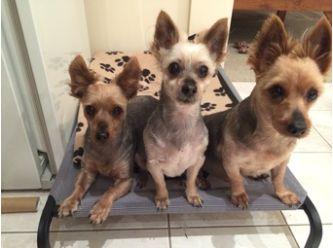 Diane's Rescue Pets