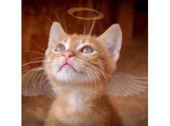 Kobe's Angel's Cat Rescue