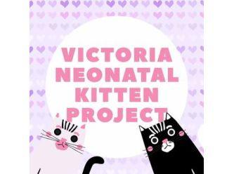 Victoria Neonatal Kitten Project