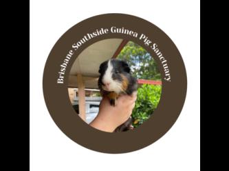 Brisbane Southside Guinea Pig Sanctuary