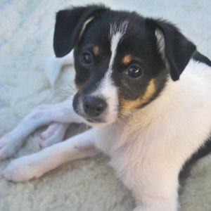 No photo for Puppy Badger Has Been Adopted