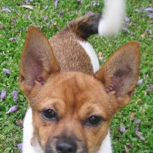 No photo for Puppy Daisy