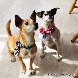 No photo for Tinkerbelle & Jacko ~ Cute Senior Pair