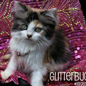 No photo for Glitterbug