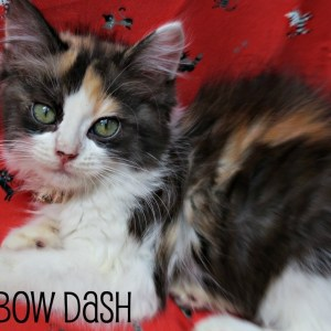 No photo for Rainbow Dash