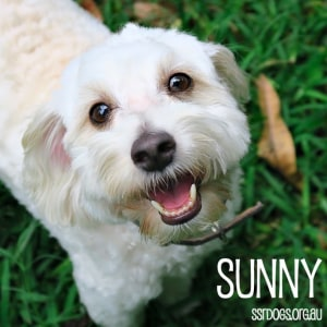 No photo for Sunny