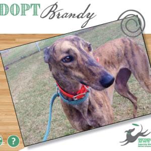 No photo for Brandy