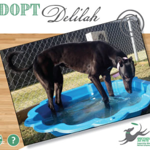 No photo for Delilah