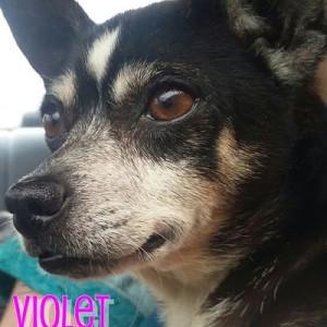 No photo for Violet