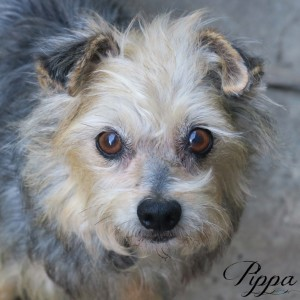 No photo for Pippa