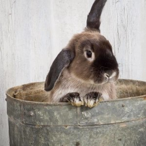No photo for Jessica Rabbit