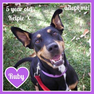 No photo for Ruby ~ Kelpie X